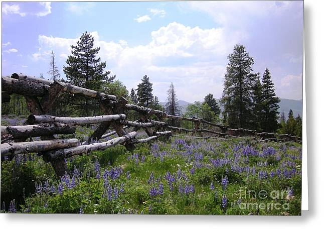 Spring Mountain Lupines 2 Greeting Card by Crystal Miller