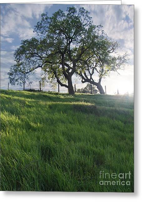 Spring Oaks Greeting Card by Stu Shepherd