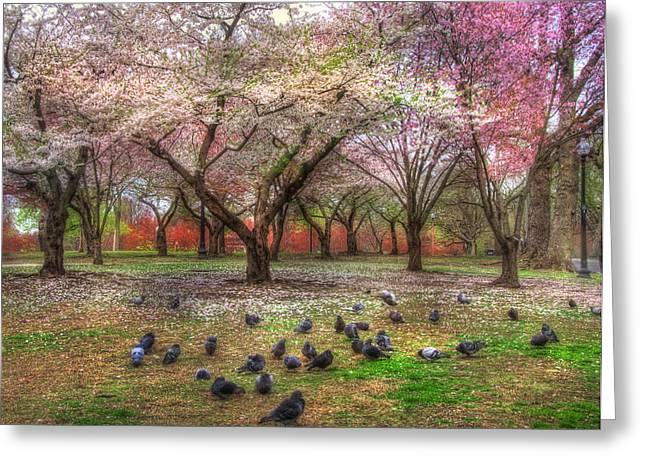 Pigeon In Park Greeting Cards - Spring on Boston Common Greeting Card by Joann Vitali