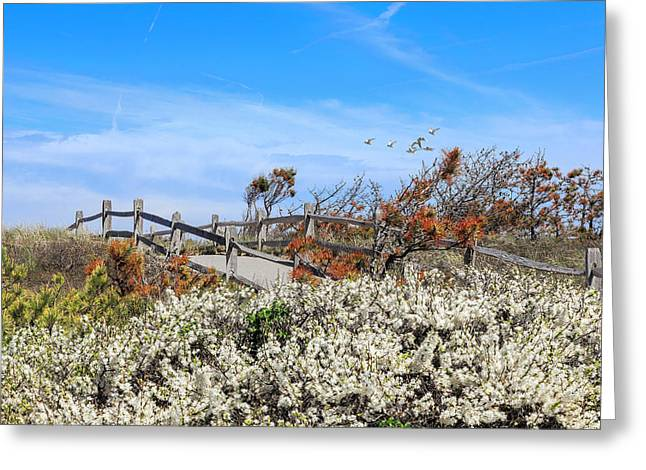 Marconi Beach Greeting Cards - Spring On Cape Cod Greeting Card by Bill  Wakeley