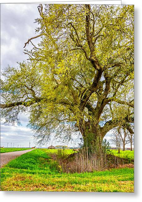 Grey Clouds Greeting Cards - Spring On the Delta 2 Greeting Card by Steve Harrington