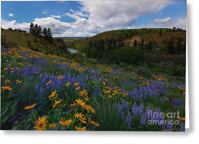 Yakima River Greeting Cards - Spring on the Yakima Greeting Card by Mike  Dawson