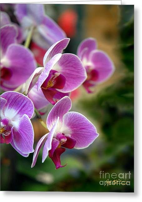 Jeff Mcjunkin Greeting Cards - Spring Orchids I Greeting Card by Jeff McJunkin