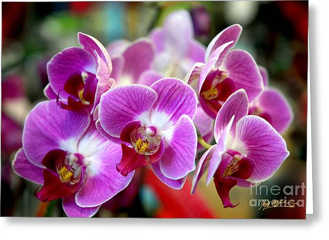 Jeff Mcjunkin Greeting Cards - Spring Orchids II Greeting Card by Jeff McJunkin