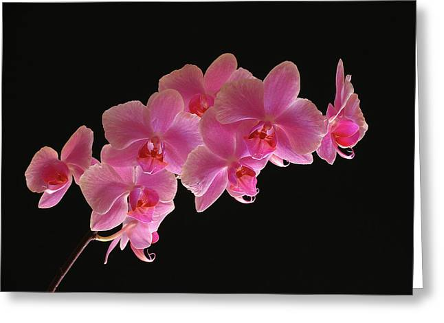 Orchid Canvas Greeting Cards - Spring Orchids Greeting Card by Juergen Roth