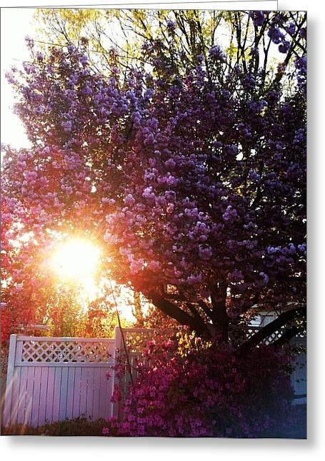 Spring Paradise Greeting Card by Toni Martsoukos