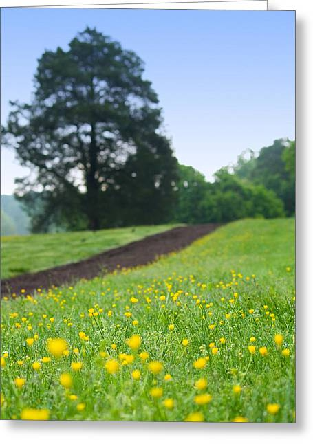 Spring Path At Victor Ashe Park Greeting Card by Melinda Fawver