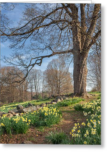 Bucolic Scenes Greeting Cards - Spring Path Greeting Card by Bill  Wakeley