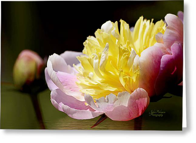 Chicago Botanic Garden Greeting Cards - Spring Peony 4 Greeting Card by Julie Palencia
