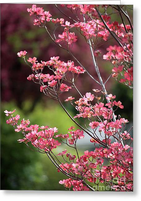 Spring Scenes Photographs Greeting Cards - Spring Pink and Green Greeting Card by Carol Groenen