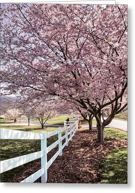 Tennessee Farm Greeting Cards - Spring Pink Greeting Card by Debra and Dave Vanderlaan