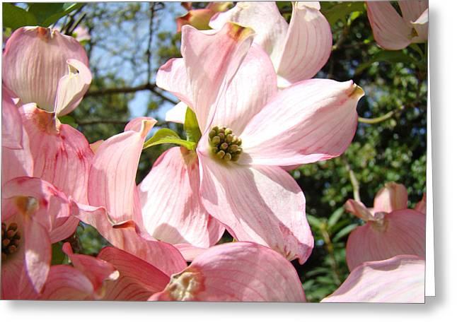 Pink Flower Prints Greeting Cards - Spring Pink Dogwood Floral art prints Flowers Greeting Card by Baslee Troutman Fine Art Prints