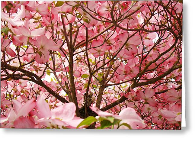 Pink Flower Prints Greeting Cards - Spring Pink Dogwood Tree Blososms art prints Greeting Card by Baslee Troutman Photography Art Prints