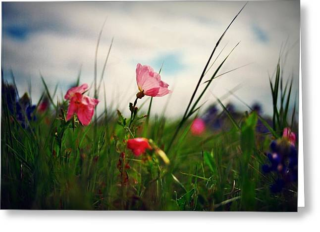 Medium Flowers Greeting Cards - Spring Pink Greeting Card by Linda Unger