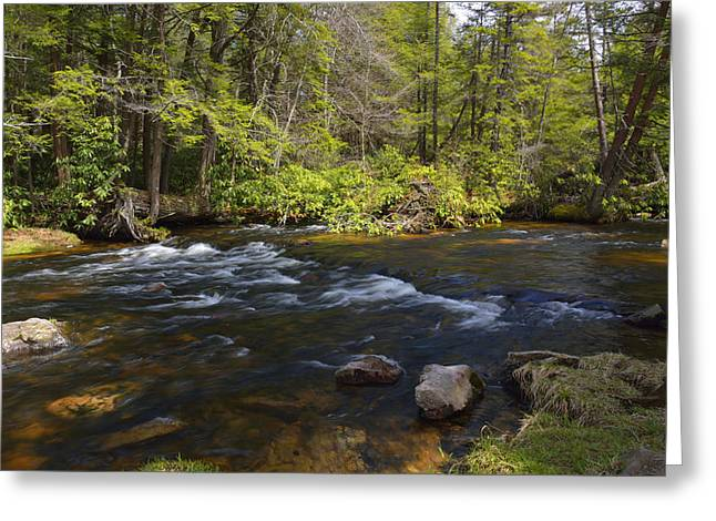 Mud Season Greeting Cards - Spring Pocono Mountain Stream Pennsylvania Greeting Card by A Gurmankin