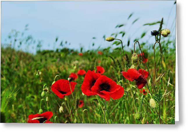 Flower Express Greeting Cards - Spring poppy field Greeting Card by Marina Slusar