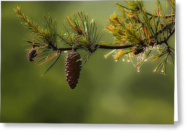 Pine Cones Greeting Cards - Spring Rain and Pinecone Greeting Card by Michael Eingle