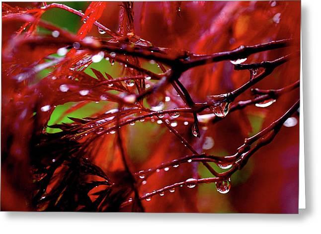 Fresh Greeting Cards - Spring Rain Greeting Card by Rona Black