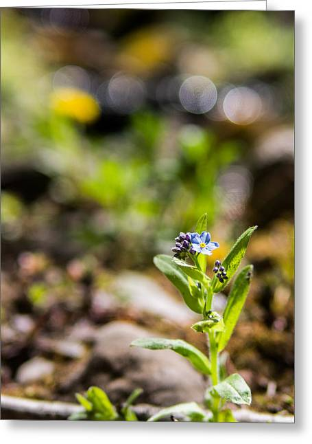 """forget Me Not Flowers"" Greeting Cards - Spring Remembered Greeting Card by Aaron Aldrich"