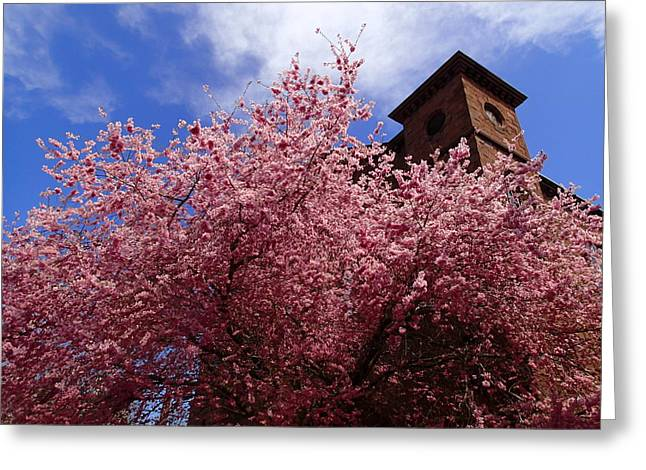 Spring Greeting Card by Robert Nickologianis
