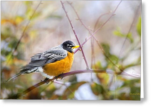 Spring Robin Greeting Card by Christina Rollo