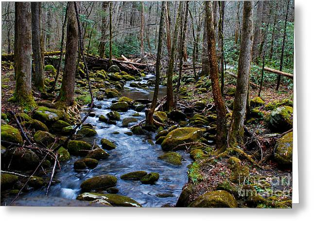 Tennessee River Digital Greeting Cards - Spring Smoky Mountain Stream  Greeting Card by Nancy Mueller
