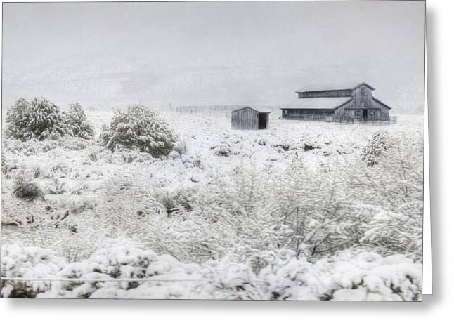 Winter Storm Greeting Cards - Spring Snow Storm Greeting Card by Lori Deiter