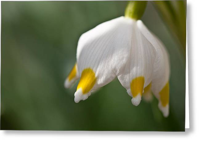 Spring Snowflake Greeting Card by Andreas Levi