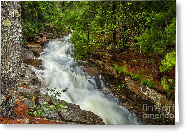 Spring In Maine Greeting Cards - Spring Stream in Acadia Greeting Card by Susan Cole Kelly