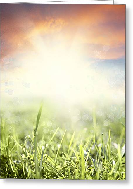 Beauty Greeting Cards - Spring sun Greeting Card by Les Cunliffe