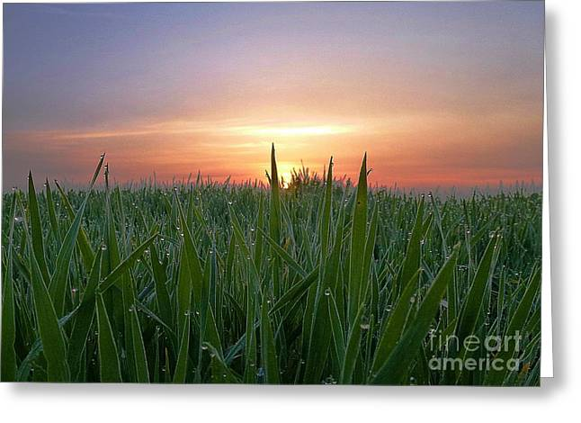 Spring Sunrise Greeting Card by AmaS Art