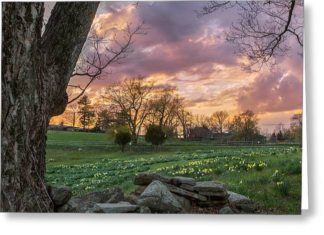 Pink Flower Greeting Cards - Spring Sunset Square Greeting Card by Bill  Wakeley