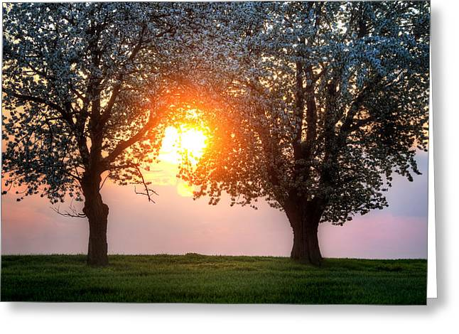 Stein Pyrography Greeting Cards - Spring Sunset Greeting Card by Steffen Gierok