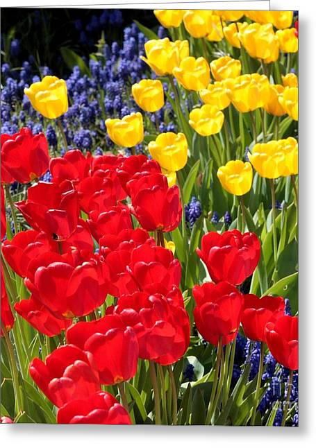 Primary Greeting Cards - Spring Sunshine Greeting Card by Carol Groenen
