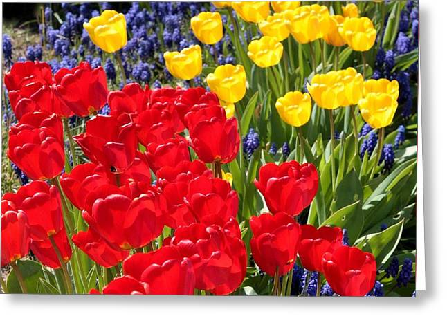 Happy Colors Greeting Cards - Spring Sunshine Greeting Card by Carol Groenen