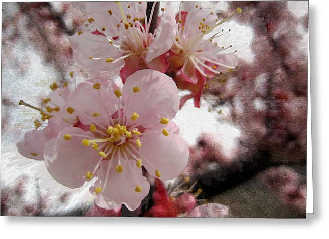 Apricot Digital Art Greeting Cards - Spring Textures Greeting Card by Kathy Bassett