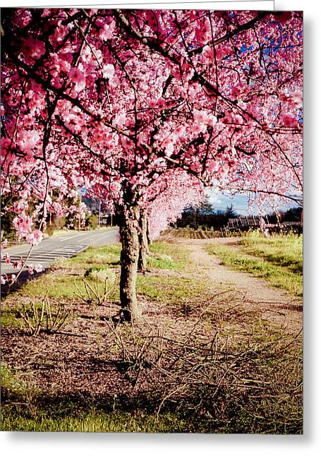 Pink Road Greeting Cards - Spring Time Greeting Card by Aron Kearney Fine Art Photography
