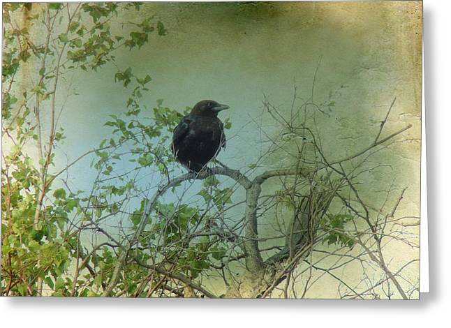 Crows In Trees Greeting Cards - Spring Tree And Crow Greeting Card by Gothicolors Donna Snyder