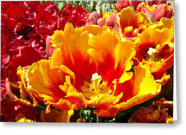 Art Heals Greeting Cards - Spring Tulip Flowers art prints Yellow Red Tulip Greeting Card by Baslee Troutman