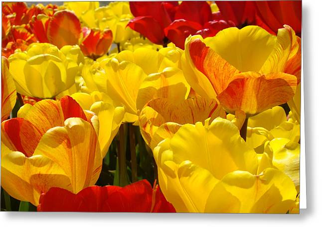 Art Heals Greeting Cards - SPRING TULIPS art prints Yellow Red Tulip Flowers Greeting Card by Baslee Troutman