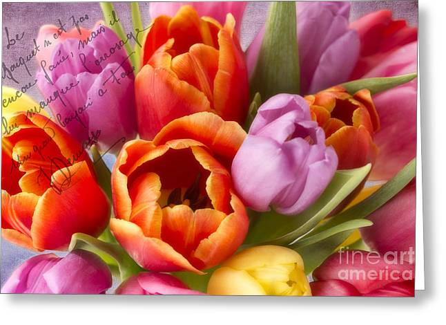 Cindi Ressler Greeting Cards - Spring Tulips Greeting Card by Cindi Ressler