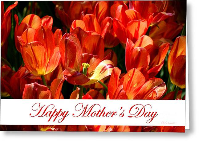 Spring Bulbs Greeting Cards - Spring Tulips - Mothers Day Greeting Card by E B Schmidt