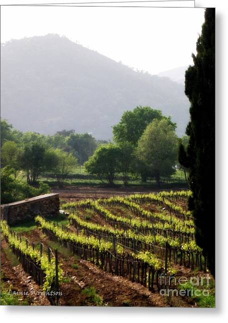 Lainie Wrightson Greeting Cards - Spring Vines in Provence Greeting Card by Lainie Wrightson