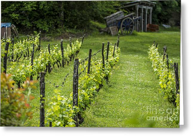 Wine Cart Greeting Cards - Spring Vines Greeting Card by Tony Priestley