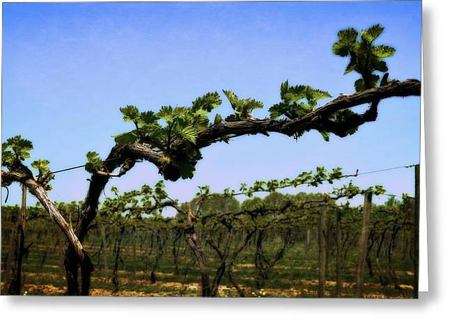 Grape Vine Greeting Cards - Spring Vineyard Greeting Card by Michelle Calkins