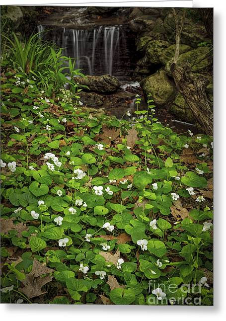 Early Spring Greeting Cards - Spring voilets near creek Greeting Card by Elena Elisseeva
