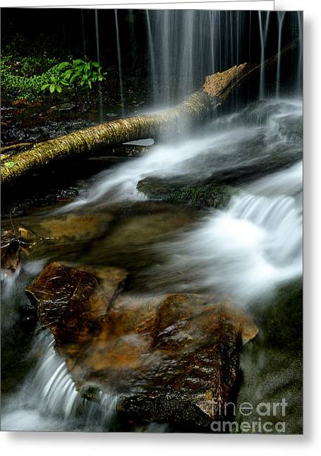 Webster County Greeting Cards - Spring Waterfall Monongahela National Forest Greeting Card by Thomas R Fletcher