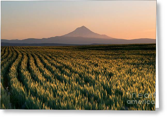 Mt Greeting Cards - Spring Wheat Greeting Card by Mike  Dawson