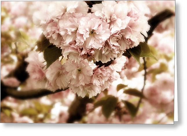 Blossoming Cherry Tree Greeting Cards - Spring Whisper Greeting Card by Jessica Jenney