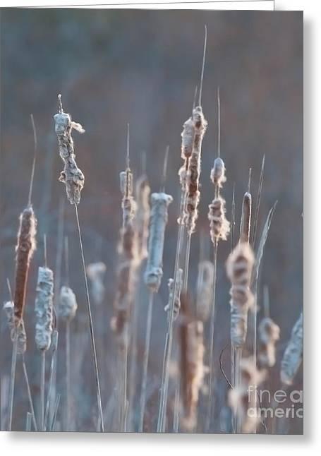 Festblues Greeting Cards - Spring Whisper... Greeting Card by Nina Stavlund